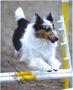 Queen City Agility Club Events